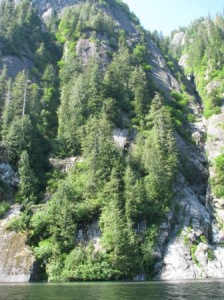 TREES_GROW_OUT_OF_MOUNTAIN